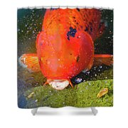 Fish Surprise Shower Curtain