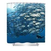Fish Watch Shower Curtain