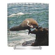 Fishing Sea Lion Shower Curtain