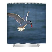 Fishing Tern Shower Curtain