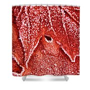 Five O'clock Frost Shower Curtain