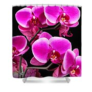Five Orchids  Shower Curtain