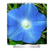 Five Point Star Morning Glory  Shower Curtain