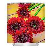 Five Red Dasies Shower Curtain