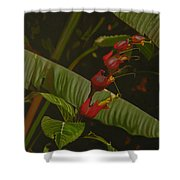 Five Red Shower Curtain