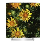 Five Yellow Flowers  Shower Curtain