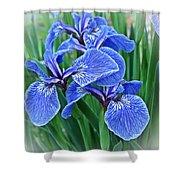 Flag Iris Blues Shower Curtain