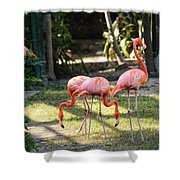 Flamago Twins  Shower Curtain