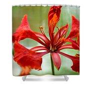 Flamboyant Beauty Shower Curtain