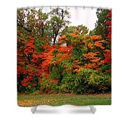 Flamboyant Forest Shower Curtain
