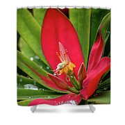 Flame Of Jamaica Shower Curtain