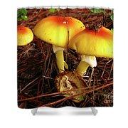 Flame Pluteus Mushroom  Shower Curtain
