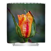 Flame Rose Shower Curtain