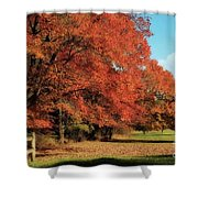 Flame Trees Shower Curtain
