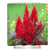 Flames Of Celosia Shower Curtain