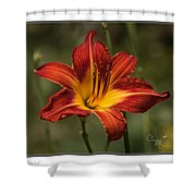 Flaming Lily Shower Curtain