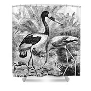 Flamingo & Jabiru Shower Curtain