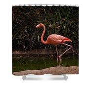 Flamingo 1 San Diego Zoo Shower Curtain