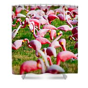 Flamingo 6 Shower Curtain