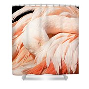 Flamingo Abstract Shower Curtain