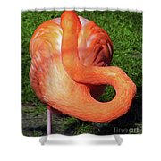 Flamingo Asleep Shower Curtain