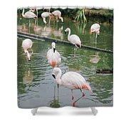 Flamingo Bath  Shower Curtain