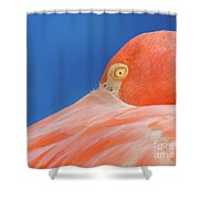 Flamingo Blues Shower Curtain