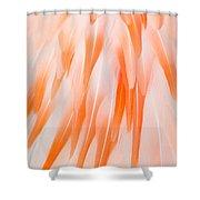 Flamingo Closeup Shower Curtain