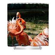 Flamingo Colony Shower Curtain