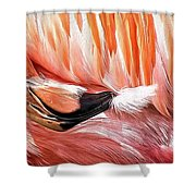 Flamingo Feather Shower Curtain