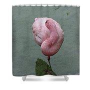 Flamingo Feathers Shower Curtain