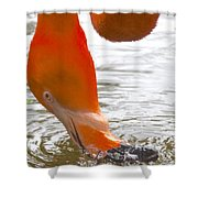 Flamingo Feeding Shower Curtain