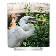 Flamingo Gardens - Great Egret Profile Shower Curtain