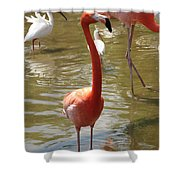 Flamingo II Shower Curtain