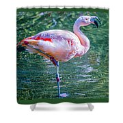 Flamingo In Still Waters Shower Curtain