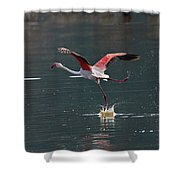 Flamingo Kick Off  Shower Curtain