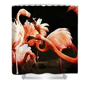 Flamingo Kisses Shower Curtain