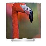 Flamingo Portrait - Sacramento Zoo Shower Curtain