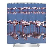 Flamingo Reflection - Lake Nakuru Shower Curtain