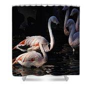 Flamingo Study - 2 Shower Curtain