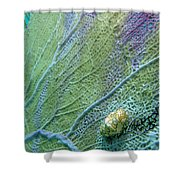 Flamingo Tongue Shower Curtain