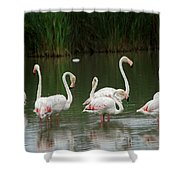 Flamingoes And Their Reflections Shower Curtain
