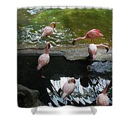 Flamingoes At The Zoo Shower Curtain