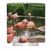 Flamingoes Looking Oh So Pretty  Shower Curtain