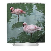 Flamingoes Posing Shower Curtain