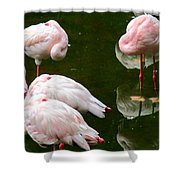 Flamingos 10 Shower Curtain