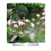 Flamingos 4 Shower Curtain