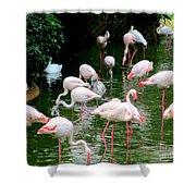 Flamingos 6 Shower Curtain