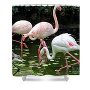 Flamingos 8 Shower Curtain