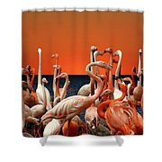 Flamingos At The Cape Shower Curtain